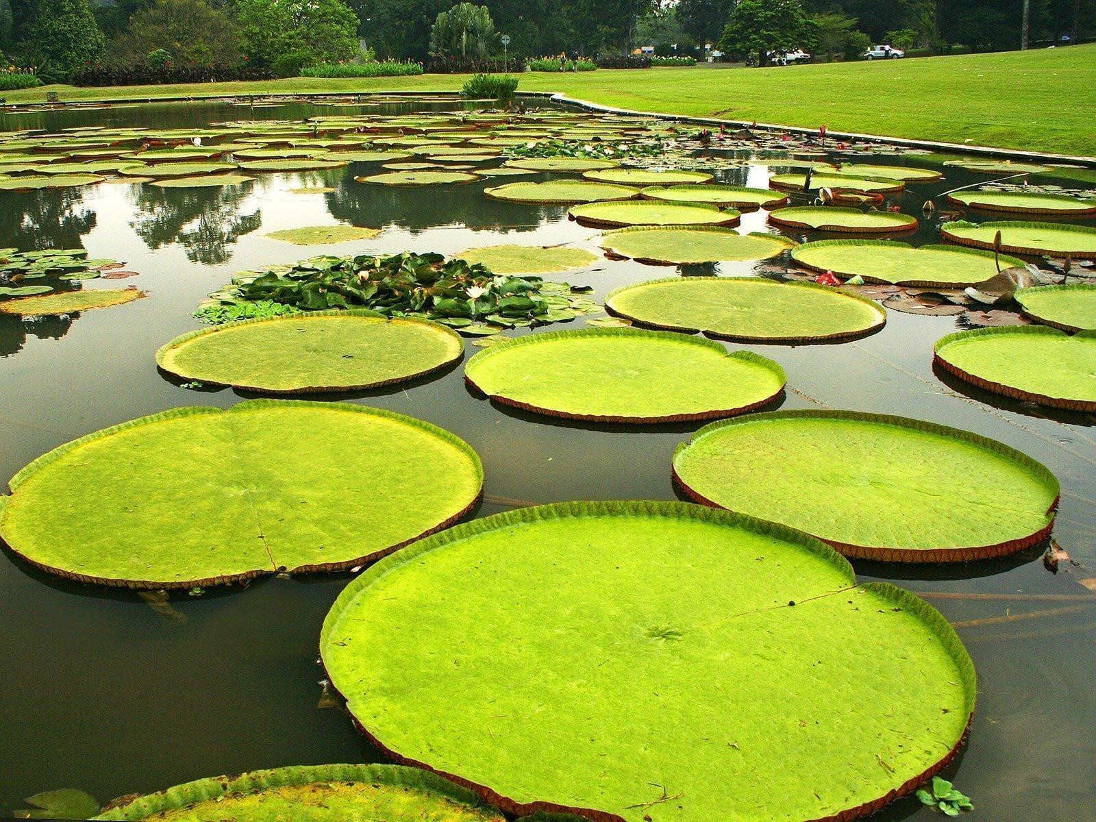 rondreis java bogor botanische tuin dag-tot-dag 1