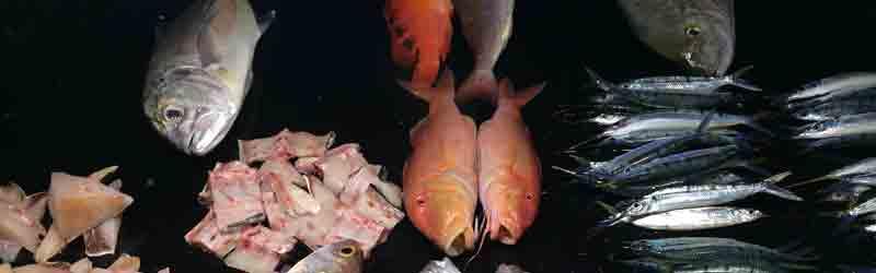 Vis eten in de haven van Waingapu op Sumba