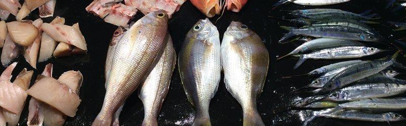 Visjes in de haven van Waingapu op het eiland Sumba