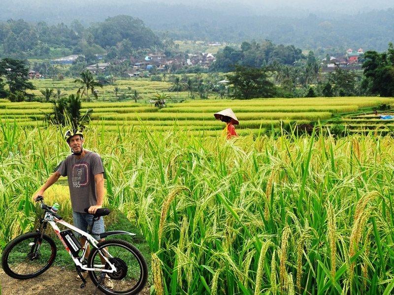 Rijstvelden bij Jatiluwih | Rondreis Bali