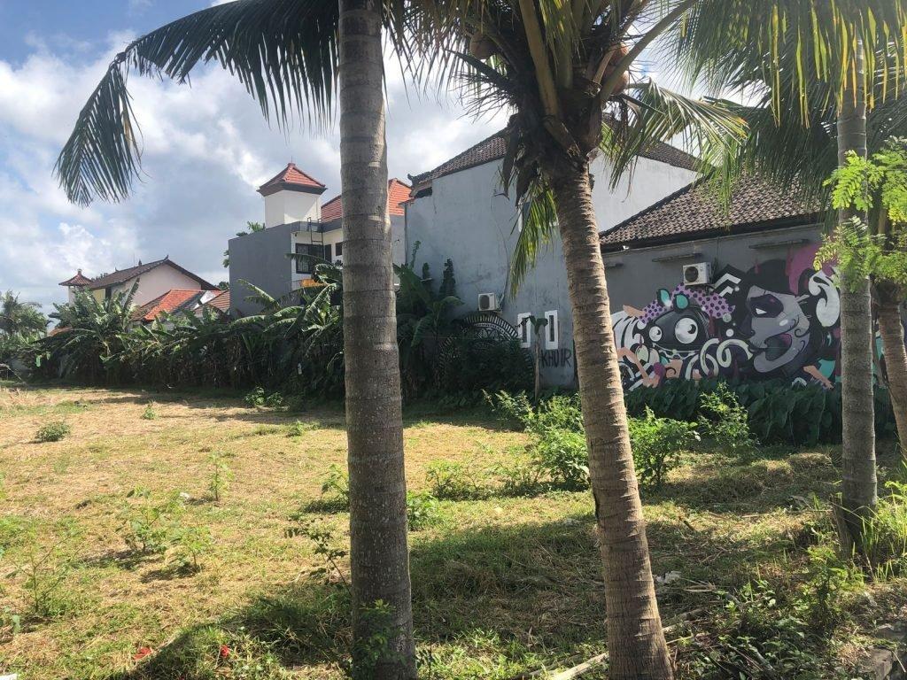 Palmbomen in Canggu, Bali