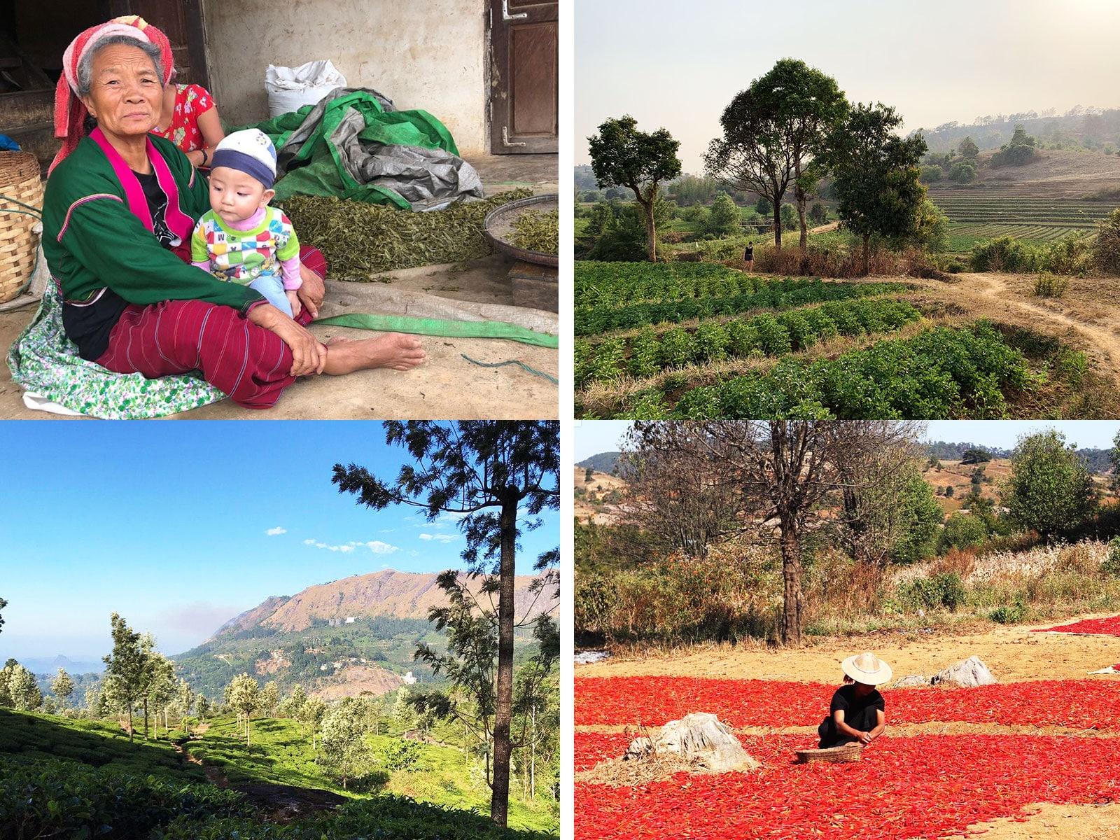 reisverslag myanmar blog lauren  kalaw wandelingen