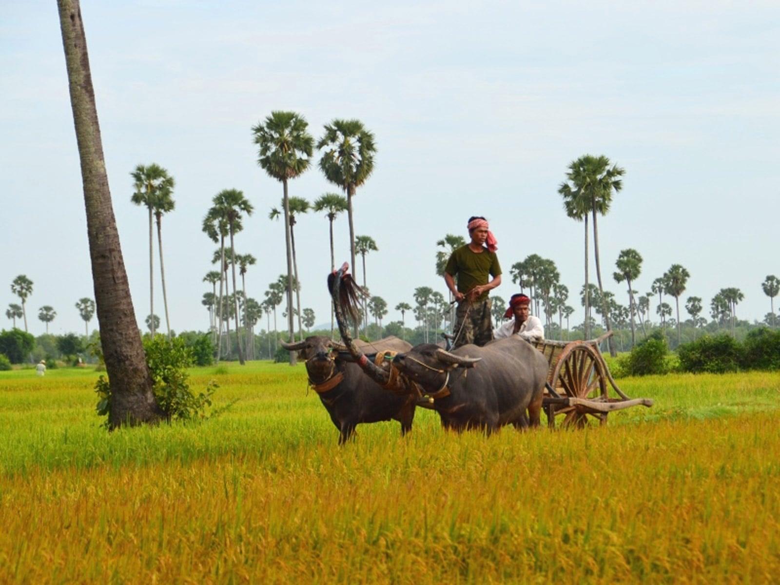 rondreis cambodja battambang hoogtepunt 11