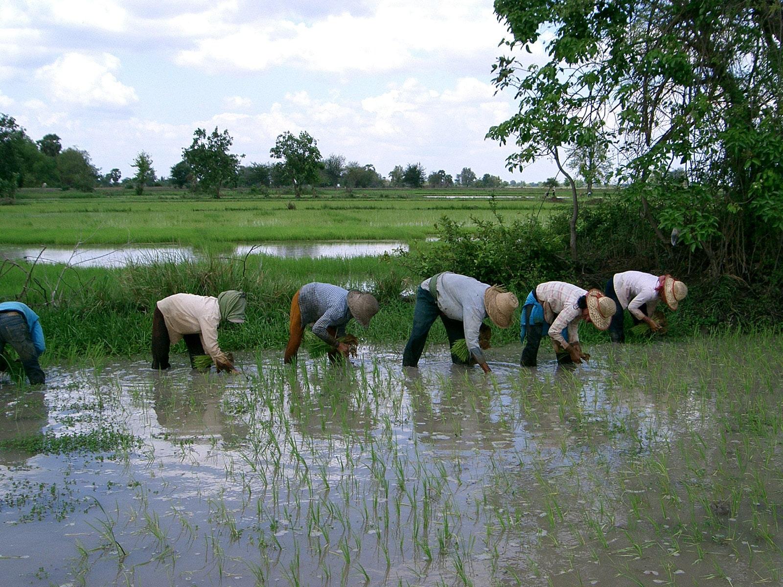 rondreis cambodja battambang hoogtepunt 4