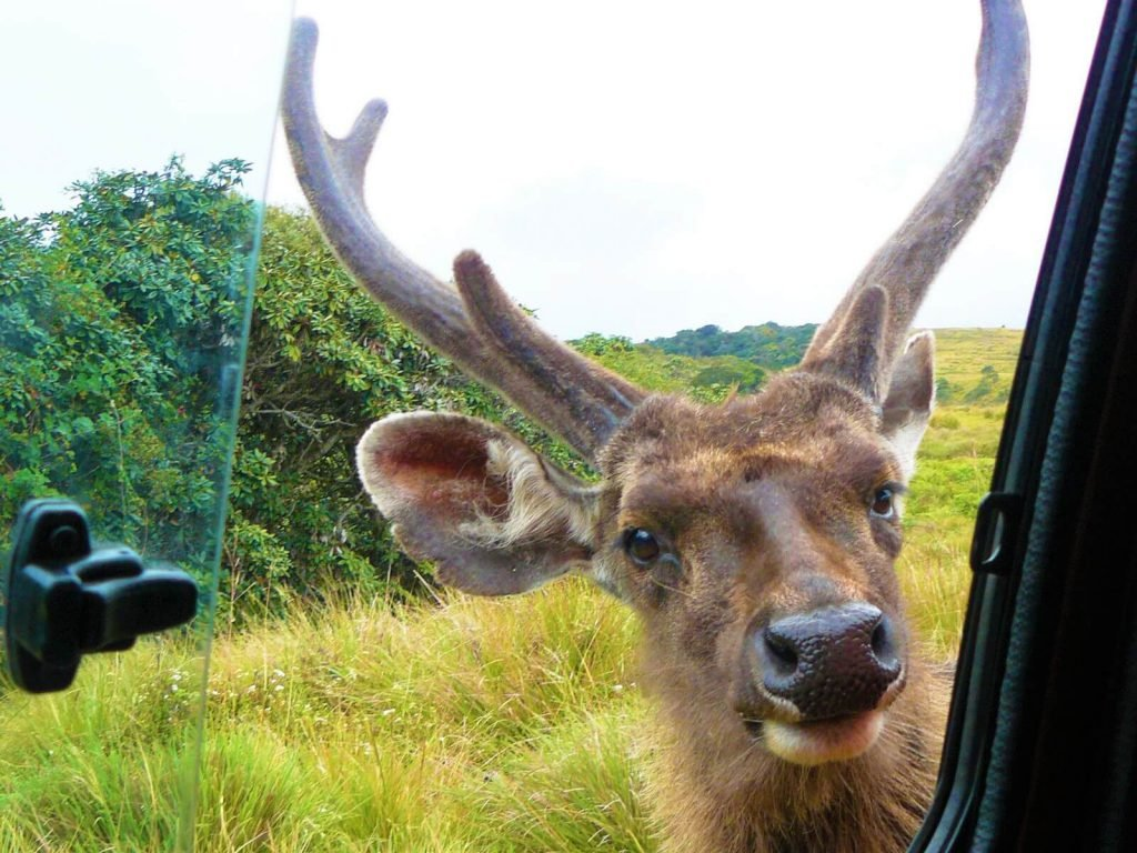 Horton Plains National Park | Rama Tours