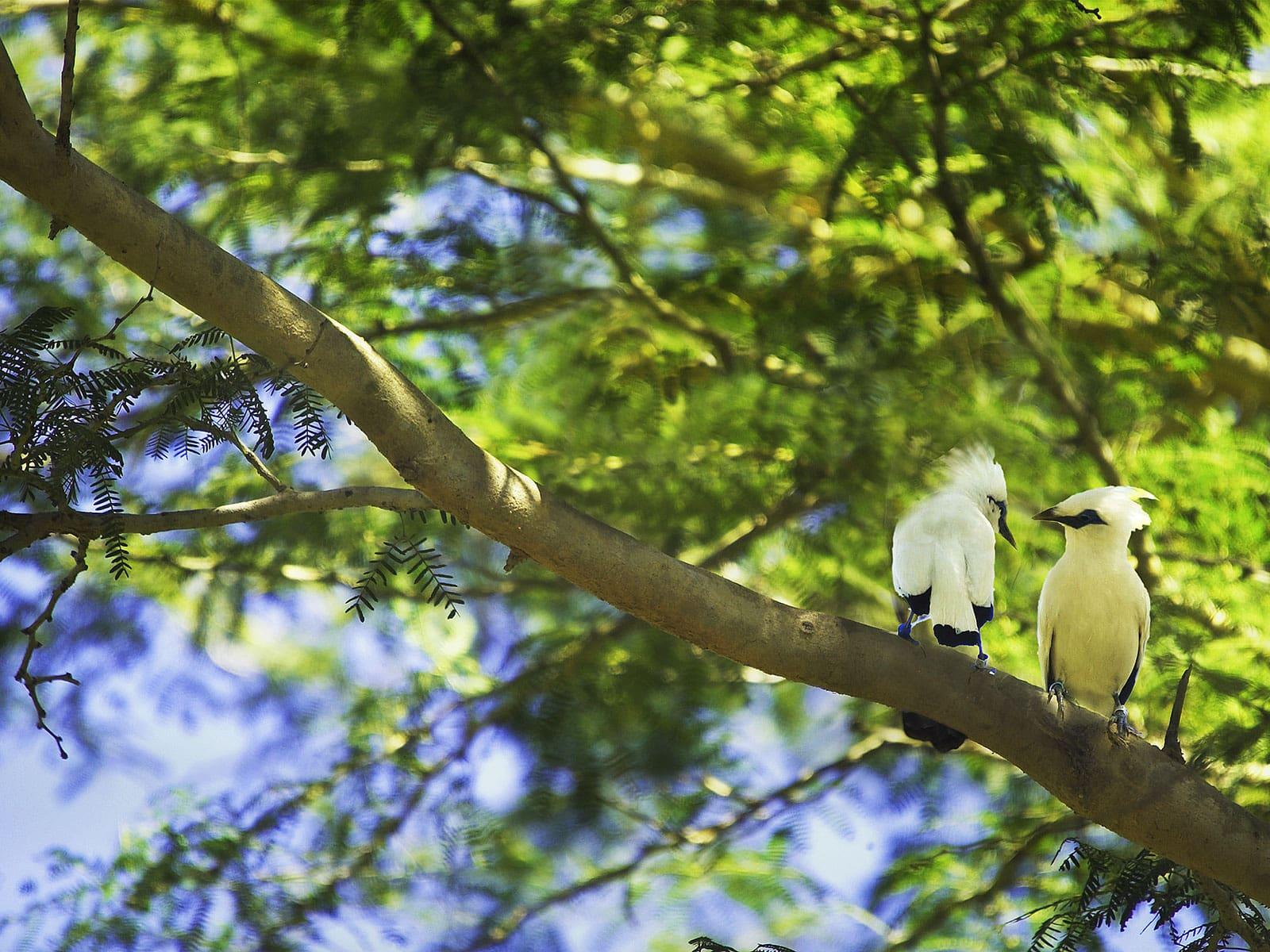 rondreis bali bali barat national park blog