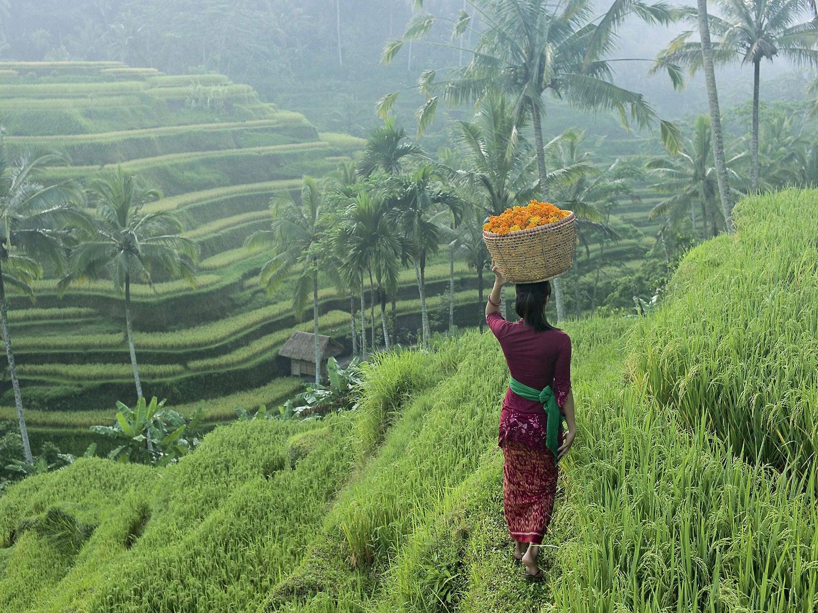 rondreis bali belimbing sawas rijstvelden blog