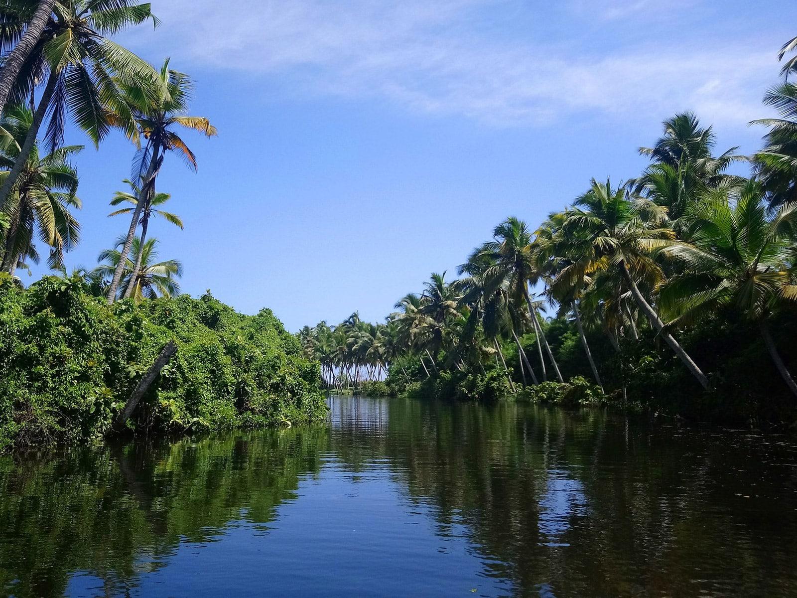 rondreis india backwaters van kerala hoogtepunt 21